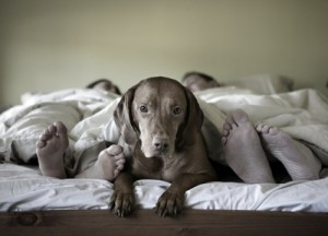 dog-on-bed-with-people-500x360
